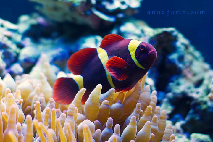 under the sea idaho aquarium nature anna gorin photography