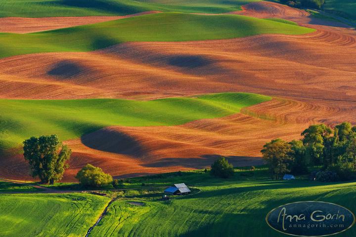 springtime on the palouse    landscapes    anna gorin design  u0026 photography  boise  idaho