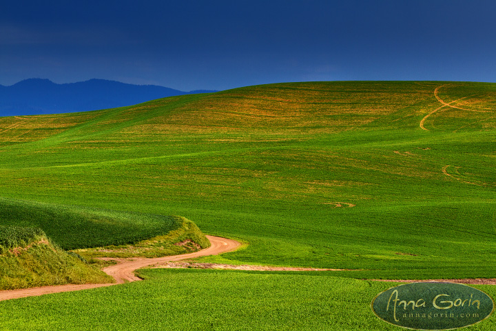 Springtime on the Palouse | washington travel sunset steptoe butte state park steptoe butte rural palouse northwest moscow landscapes idaho hills country colfax  | Anna Gorin Design & Photography, Boise, Idaho